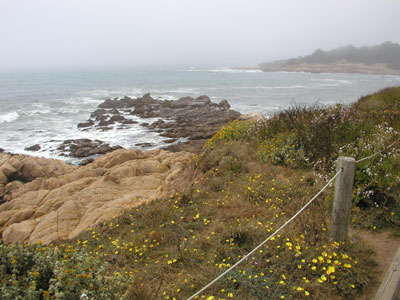 Photo of Moonstone Beach boardwalk