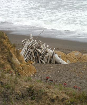 Photo of driftwood on Moonstone Beach